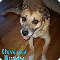 Adopt A Pet :: Buddy - Berea, OH