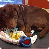 Adopt A Pet :: Creek - Ledgewood, NJ