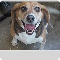 Adopt A Pet :: Carmyn - East Hartland, CT