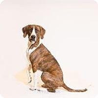 Adopt A Pet :: Gracie - Los Alamos, NM
