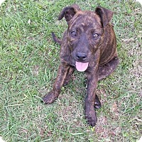 Adopt A Pet :: Brenda - New Milford, CT