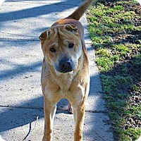 Adopt A Pet :: We need a home! - Bethesda, MD