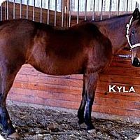 Adopt A Pet :: Kyla - Elverta, CA