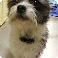Adopt A Pet :: Widget - Cumberland, MD