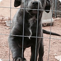 Adopt A Pet :: Joanie - McLoud, OK