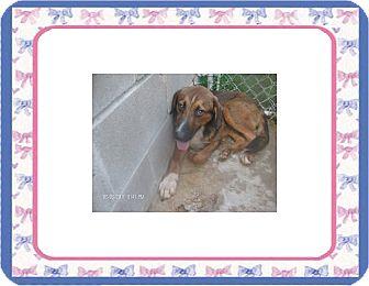 Hound (Unknown Type) Mix Dog for adoption in KELLYVILLE, Oklahoma - ZIGGY