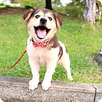 Adopt A Pet :: Dormu - Temple City, CA