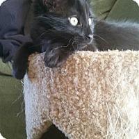 Adopt A Pet :: Taz - Loveland, CO