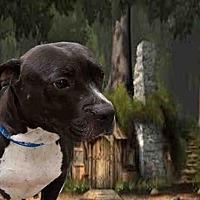 Adopt A Pet :: FEONA - Fairfield, CA