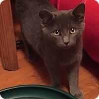 Adopt A Pet :: Roscoe - Delmont, PA