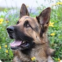 Adopt A Pet :: Diesel - San Diego, CA