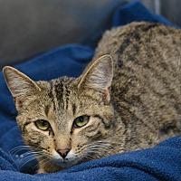 Adopt A Pet :: Prim - Pittsburg, KS