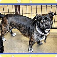 Adopt A Pet :: Gypsy - San Jacinto, CA
