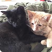 Adopt A Pet :: Cleveland - Warren, MI