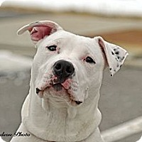 Adopt A Pet :: Caine - PENDING, in ME - kennebunkport, ME
