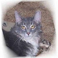 Adopt A Pet :: Pepper - Montgomery, IL