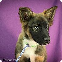 Adopt A Pet :: TahIni - Broomfield, CO