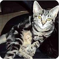 Adopt A Pet :: Kara - Modesto, CA