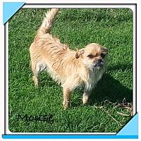 Adopt A Pet :: Mouse - San Antonio, TX