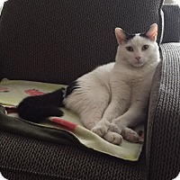 Adopt A Pet :: Carlos (Laidback/Affectionate) - Arlington, VA