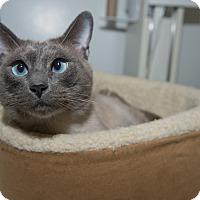 Adopt A Pet :: Nathan - New York, NY