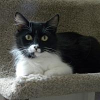 Adopt A Pet :: Tina - Prescott, AZ
