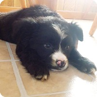Adopt A Pet :: Polly (adopted) - Burlington, VT