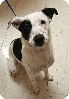 Border Collie Mix Dog for adoption in Nicholasville, Kentucky - Roxy