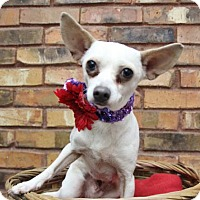 Adopt A Pet :: Roxy - Benbrook, TX
