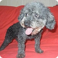 Adopt A Pet :: Fanny ADOTPED!! - Antioch, IL