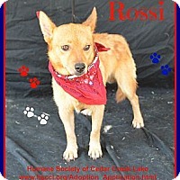 Adopt A Pet :: Rossi - Plano, TX