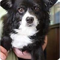 Adopt A Pet :: Rosa - Arlington, TX