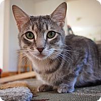 Adopt A Pet :: Max - Bedford, MA
