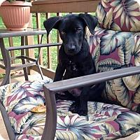 Adopt A Pet :: Dex - Lewisville, IN