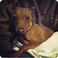Adopt A Pet :: Dizzy - McDonough, GA