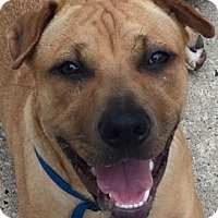 Adopt A Pet :: Sabrina - Barnegat Light, NJ