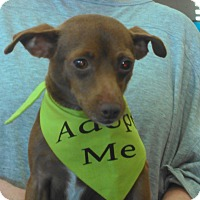 Adopt A Pet :: Holly - Huntington Beach, CA