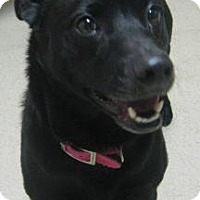 Adopt A Pet :: Smukco - Gary, IN