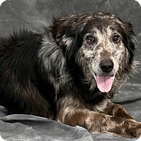 Adopt A Pet :: Chewy - Cashiers, NC