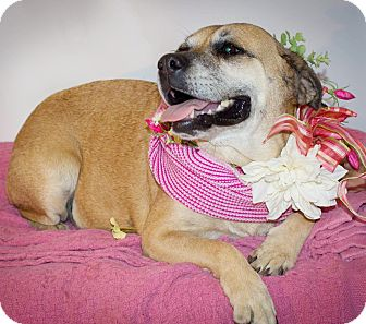 Shepherd (Unknown Type) Mix Dog for adoption in Kingston, Tennessee - Bella