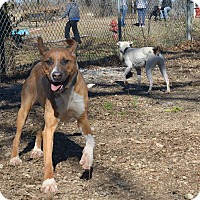 Adopt A Pet :: Maggie - Pittsburg, KS