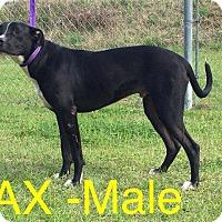 Adopt A Pet :: Lax - Waycross, GA