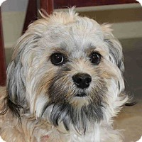 Adopt A Pet :: Sir Zeus - Frederick, MD