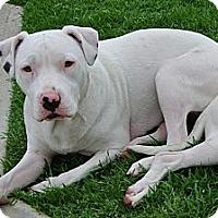 Adopt A Pet :: Lizzy - Santa Monica, CA