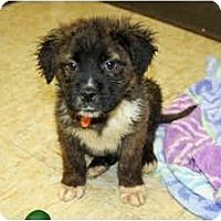 Adopt A Pet :: Kellogg - Racine, WI