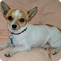 Adopt A Pet :: HEATHER - AUSTIN, TX