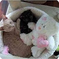 Adopt A Pet :: Doc - Port Republic, MD