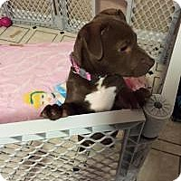Adopt A Pet :: Tessa - Marlton, NJ