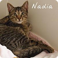 Adopt A Pet :: Nadia - Ocean City, NJ