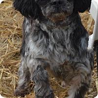 Adopt A Pet :: Ebonee - Prole, IA